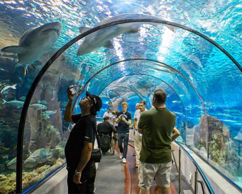 experiencia sorpresa actividad sorpresa acuario